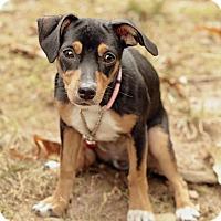 Adopt A Pet :: BonBon - Marietta, GA