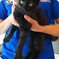 Adopt A Pet :: Nyjer - Fischer, TX