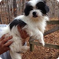 Adopt A Pet :: Rascal - pending - Manchester, NH