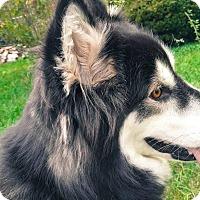 Adopt A Pet :: Luna - Augusta County, VA