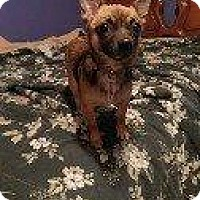 Adopt A Pet :: TRIXIE, TODD - Hampton, VA