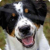 Adopt A Pet :: Buzz - Sarasota, FL