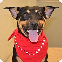 Adopt A Pet :: Phineus - Gilbert, AZ