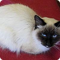 Adopt A Pet :: Samantha - Mobile, AL