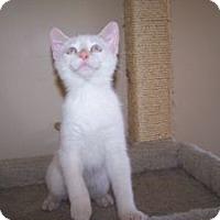 Adopt A Pet :: Muska - Colorado Springs, CO