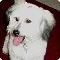 Adopt A Pet :: Taylor - La Costa, CA