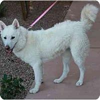 Adopt A Pet :: Sierra - Gilbert, AZ
