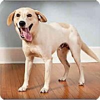 Adopt A Pet :: Toby - Owensboro, KY