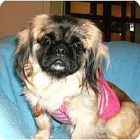 Adopt A Pet :: Rayna - Mooy, AL