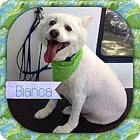 Adopt A Pet :: Jackson NJ - Bianca - New Jersey, NJ