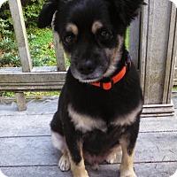 Adopt A Pet :: Odo - Gig Harbor, WA