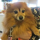 Adopt A Pet :: Toto