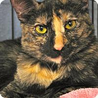 Adopt A Pet :: Hillary - Upland, CA