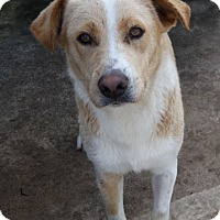 Adopt A Pet :: Brandy - Lewisville, IN