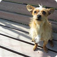 Adopt A Pet :: Gizmo - Meridian, ID
