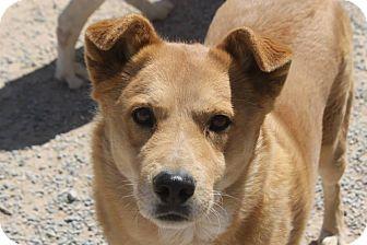 Furgotten Friends Dog Rescue Pahrump Nv