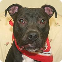 Adopt A Pet :: Kai - Cincinnati, OH