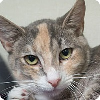 Adopt A Pet :: Patty - Redwood City, CA