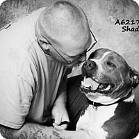 Adopt A Pet :: SHADY A621708 is in danger at Camarillo Shelter - Beverly Hills, CA