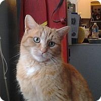 Adopt A Pet :: Anike - Mississauga, Ontario, ON