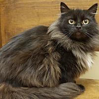 Adopt A Pet :: Megan - E. Claridon, OH