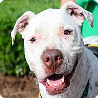 Adopt A Pet :: CASPER - West Palm Beach, FL