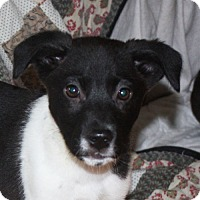 Adopt A Pet :: Noel - in Maine - kennebunkport, ME