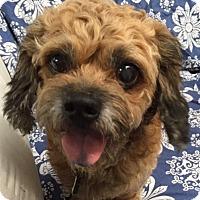 Adopt A Pet :: Spike - Ocean Ridge, FL