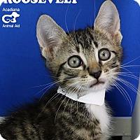 Adopt A Pet :: Roosevelt - Carencro, LA