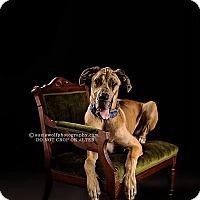 Adopt A Pet :: Flint - Raleigh, NC