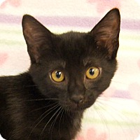 Adopt A Pet :: HP - Colorado Springs, CO