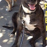 Adopt A Pet :: Lucretia - Dana Point, CA