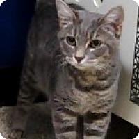 Adopt A Pet :: Lauren Bacall - Georgetown, TX