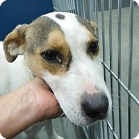 Adopt A Pet :: CC - Henderson, NC