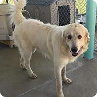 Adopt A Pet :: Blake - Pacific, MO