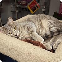 Adopt A Pet :: JACKIE O. - Phoenix, AZ