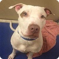 Adopt A Pet :: Lenny - Waverly, NY