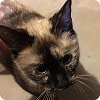 Adopt A Pet :: Nala - Greeley, CO