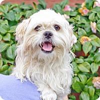 Adopt A Pet :: *Tetley Tea - Pittsburg, CA