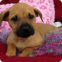 Adopt A Pet :: Makana - Trenton, NJ