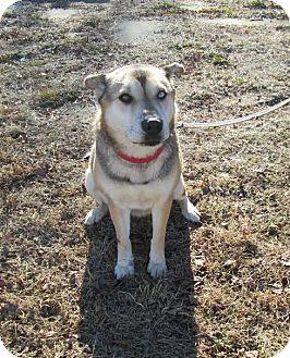 German Shepherd Dog/Siberian Husky Mix Dog for adoption in West Warwick, Rhode Island - Penelope