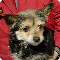 Adopt A Pet :: Jalo - Loudonville, NY