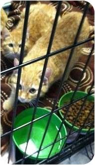 Domestic Shorthair Cat for adoption in Mobile, Alabama - Tweety