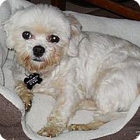 Adopt A Pet :: Lucky Penny - Cotati, CA