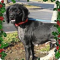Adopt A Pet :: Randi - Sugarland, TX