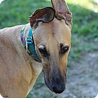 Adopt A Pet :: Kirk - Lexington, SC