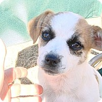Adopt A Pet :: Terry - Phoenix, AZ