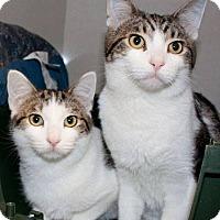 Adopt A Pet :: Cliff - Ann Arbor, MI