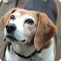 Adopt A Pet :: Drew - Howell, MI