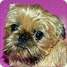 Adopt A Pet :: CAROLINA VOLUNTEERS NEEDED!